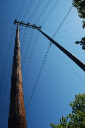 Tall Power Poles